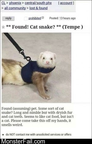 Cat Snake Found