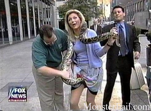 Snake looks like it took a bite out of this fox news reporters cooncha.  Bills not gonna be happy about this.