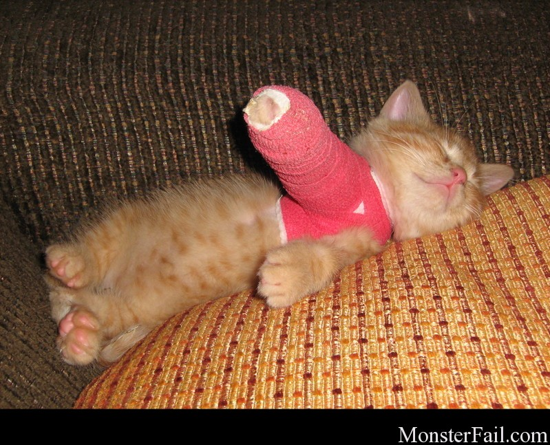 Funny kitten with cast on arm.  LOL