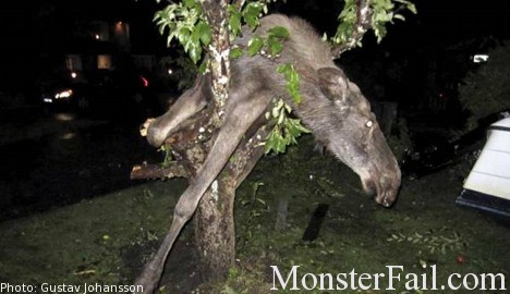 Drunk Elk Stuck In Tree Fail