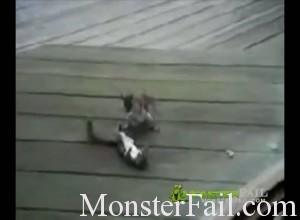 mma style fight between two squirrels
