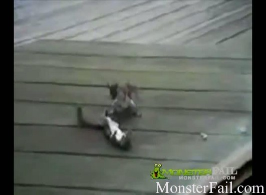Two Squirrels face off in a monster MMA fight.  Ends with a knock out.
