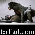 Chimp does it like champ.
