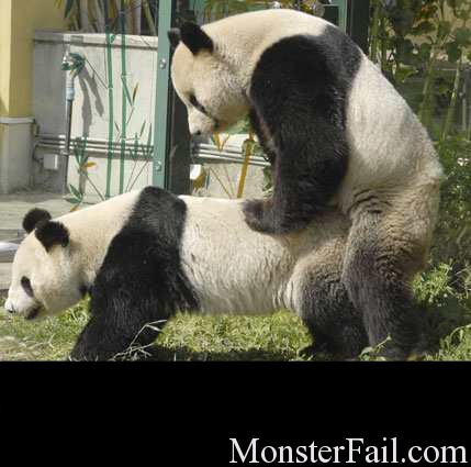 Pandas are soo cute.