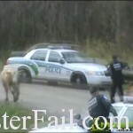 Trigger happy cops shoot poor cow.
