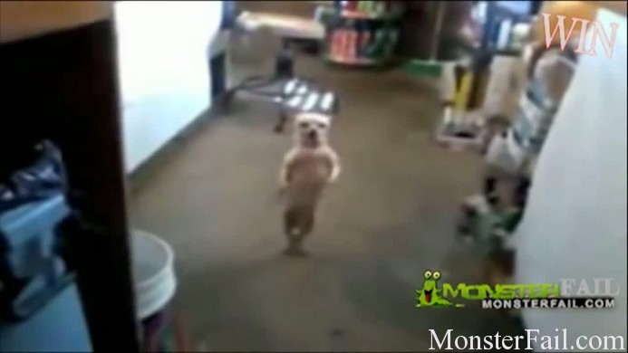 Drugged out dog dancing like crazy.
