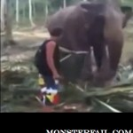 Guy gets knocked the fuck out by a cool elephant