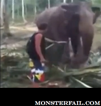 Stuff Elephants Do To Dumb People