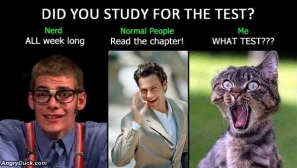 did you study