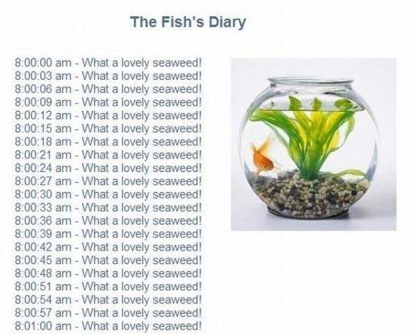 the fish diary